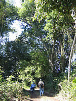 walking in the singayta jungle